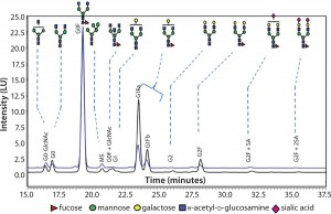 Figure 3:Comparing N-glycans released from innovator product (black) and Cook Pharmica's 20-L run (blue)