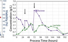 Figure 1:(left) Total cell density and viability, (middle) concentrations of glucose and lactate, (right) SEAP activity; the arrows indicate fresh media addition after 32 hours of cultivation and medium exchange to tetracycline-free production medium after 66 hours of cultivation, respectively.