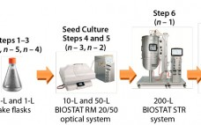 Figure 1: Seed train of the 1,000-L fed-batch cell culture run starts with one cryogenic vial before six consecutive cell-expansion steps using single-use shaker flasks and bioreactors. A 17-day fedbatch production process followed in a BIOSTAT STR 1000 system. The entire duration from cryogenic vial to 1,000-L harvest on day 17 took 35 days.