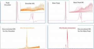 Figure 2: The Mab1 SEC peak in Figure 1 was analyzed for mass identification. The peak shoulder (left) and main peak (right) were processed separately. Inserts show ESI mass spectra and corresponding deconvoluted mass spectra are shown in the lower panels.