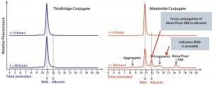 Figure 3: Comparison of the stability of ADCs produced by conjugating Alexa Fluor 488 to trastuzumab using either ThioBridge or maleimide reagents and incubated in rat serum at 37 ⁰C for 48 h; analyzed using size exclusion chromatography; the ThioBridge ADC was stable.
