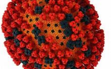 H1N1 influenza virus (WWW.VISUALSCIENCE.RU.COM)