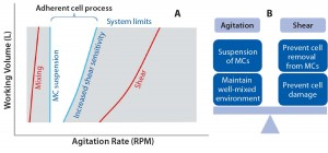Figure 1: The operating window for microcarrier processes (a) and balance agitation and shear (b)
