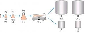Figure 2: Cell culture process design for 2-L and 20-L studies