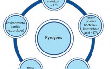 Figure 1: Pyrogens constitute a diversive heterogenous group of contaminants comprising microbial and nonmicrobial substances.