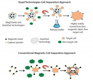 Figure 2: MagCloudz cell separation (top) uses magnetic particles as a carrier for the QuickGel technology. Target cells are captured through magnetic cell isolation workflow. After cell separation, MagCloudz system is dissolved to release target cells from magnetic carriers, which can then be removed to leave the cells in their natural state. By contrast, conventional magnetic-separation– based strategies (bottom) can retain magnetic labels.