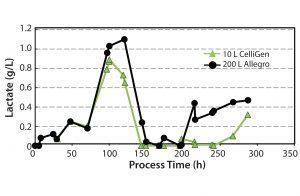Figure 7: Lactate concentration profile