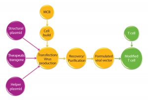 Figure 1: Manufacturing overview for viral vectors and modified T cells; MCB = master cell bank