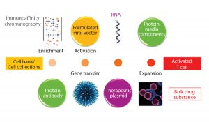 Figure 2: Starting material for modified T-cell production