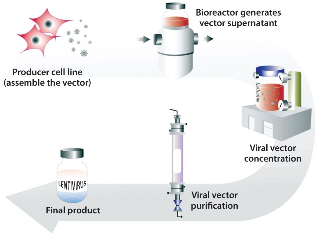TRANSGENIC ANIMALS PRODUCTION AND APPLICATION