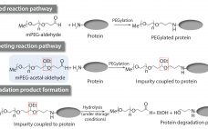 Figure 1: Proposed mechanism for the formation of the drug substance degradation product (2)